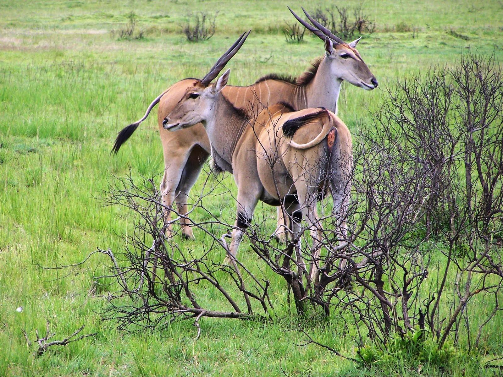 Selous-Game-Reserve-Nature-HD